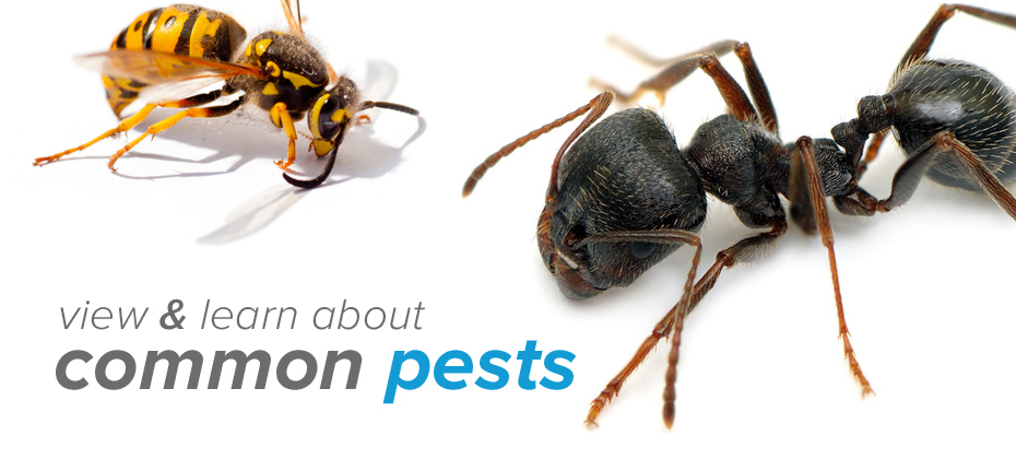 We're Pest Control Professionals