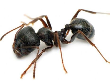 Rid your home of ants