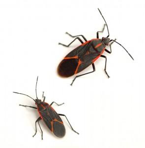 Floydada Pest Control