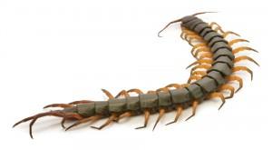 Lamesa Pest Control