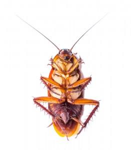 Lubbock Pest Control