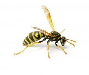 Littlefield Pest Control